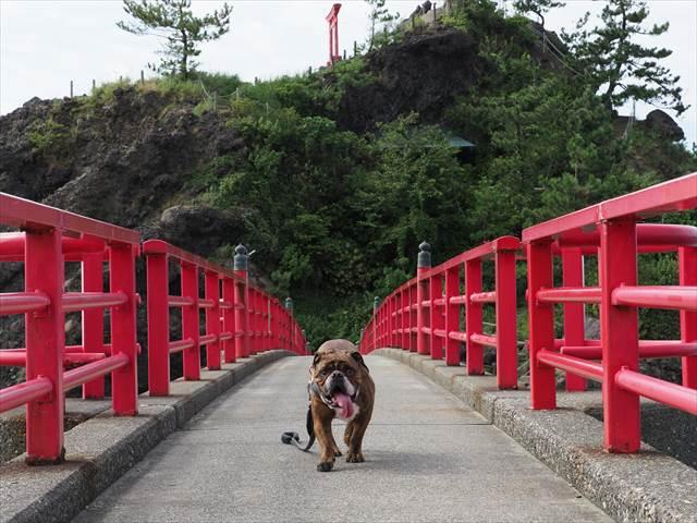 愛犬と弁天岩にて