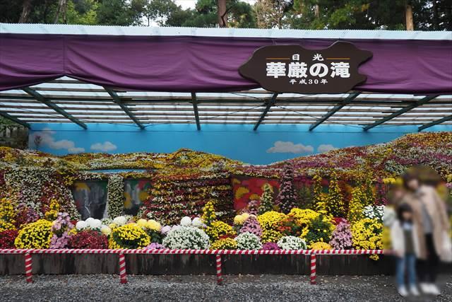 弥彦神社の菊まつり 平成30年のテーマは【日光・華厳の滝】