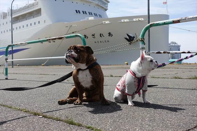 新日本海フェリーあざれあ・らいらっく