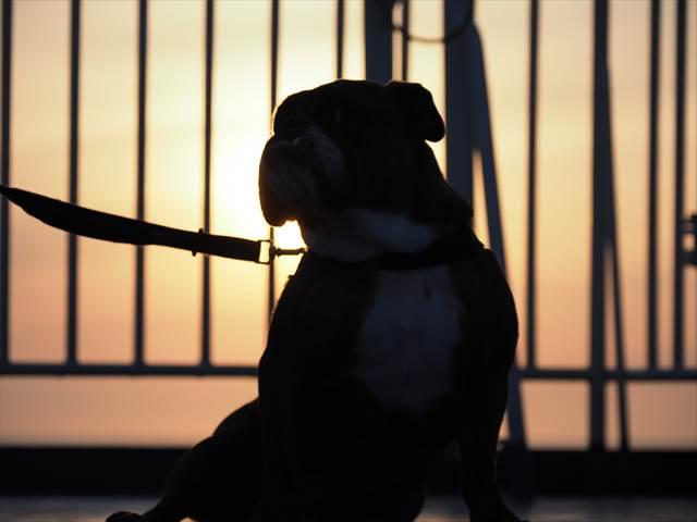 日本海フェリーの夕日に照らされて