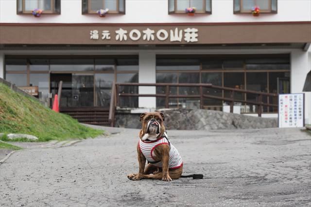 愛犬とホロホロ山荘へお泊り