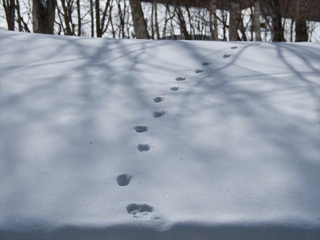 雪の上に付いたある動物の足跡