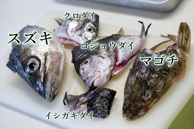 魚の頭サイズ比較