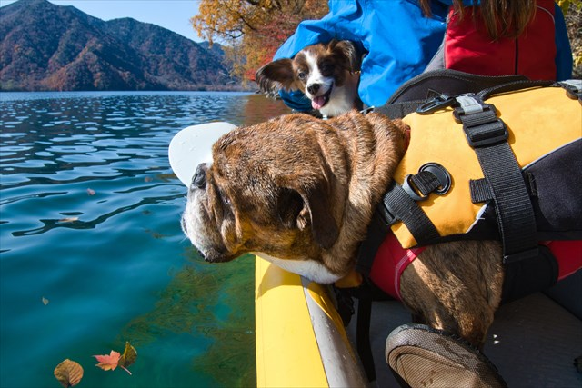 中禅寺湖で愛犬達とカヤックと紅葉を楽しむ