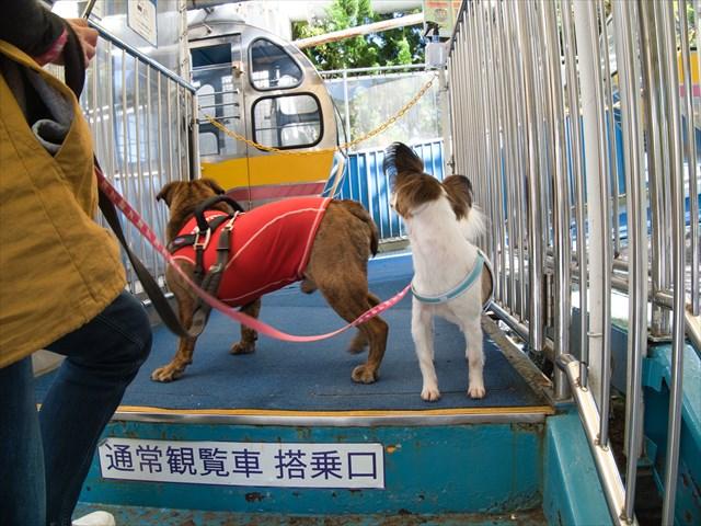 富士急ハイランド、ペットも乗れる観覧車