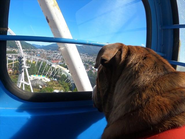 富士急ハイランドの観覧車からの眺め①
