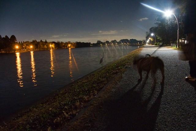 夜の水元公園は落ち着いた雰囲気